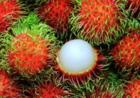 What Are The Benefits Of Rambutan Fruit?