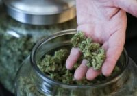 Ways To Purchase Cannabis Legally Online
